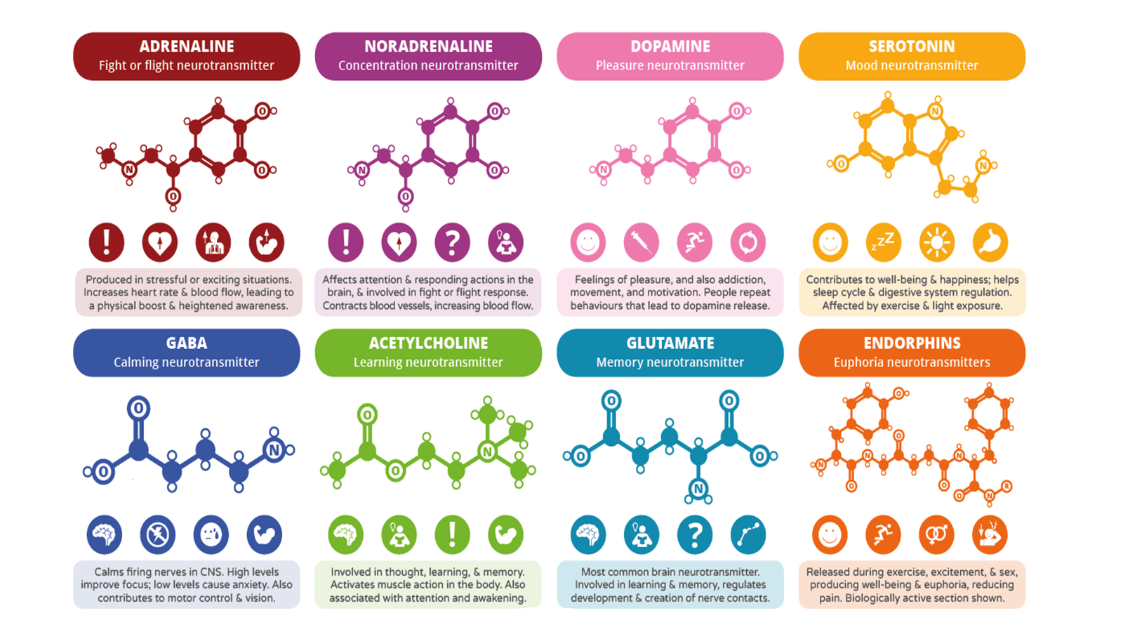 Physiology CNS neurotransmitters
