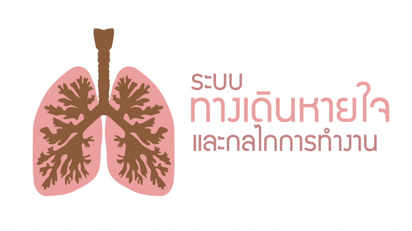ผลการค้นหารูปภาพสำหรับ ระบบหายใจ