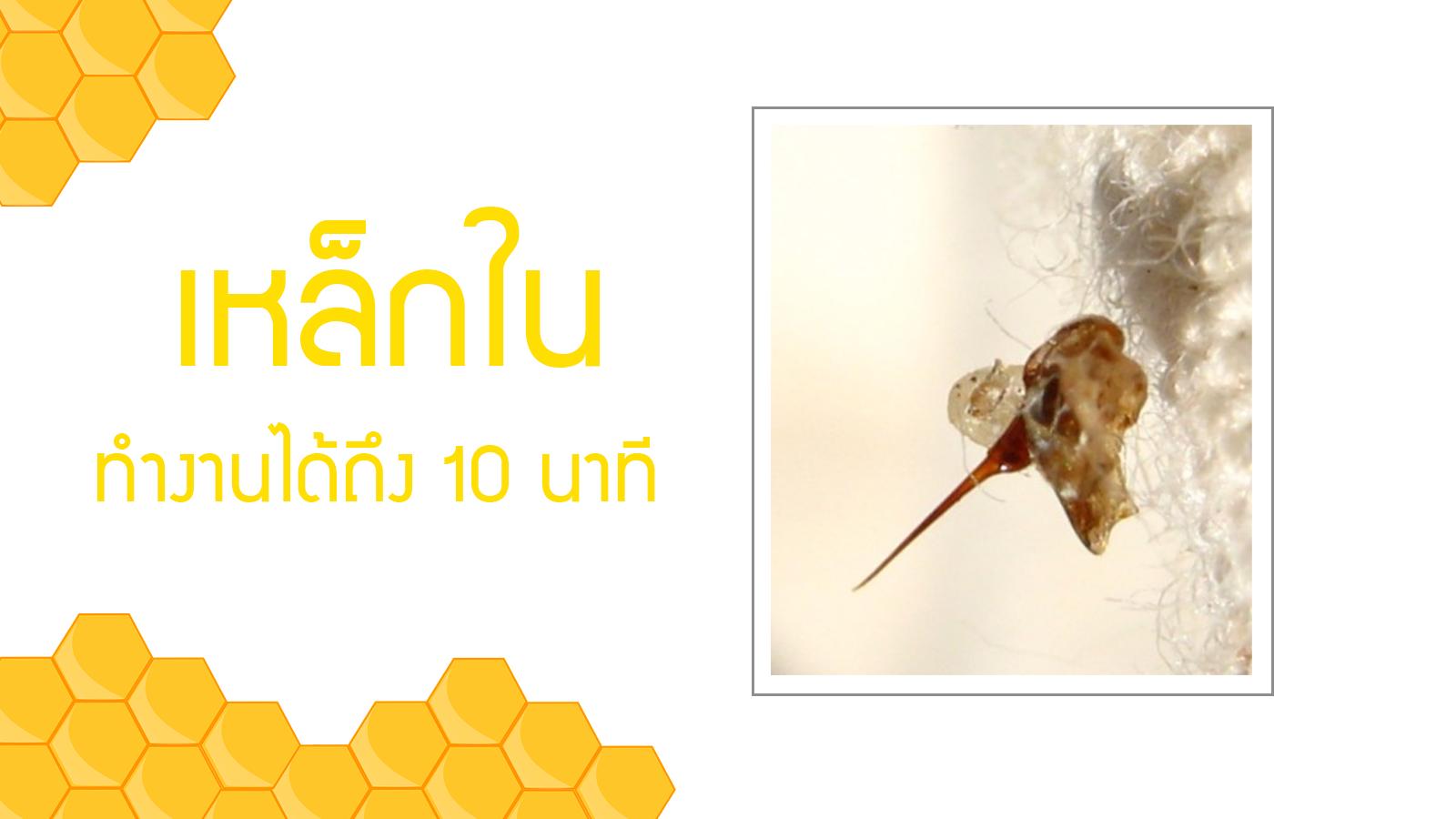 เหล็กใน ผึ้งต่อย